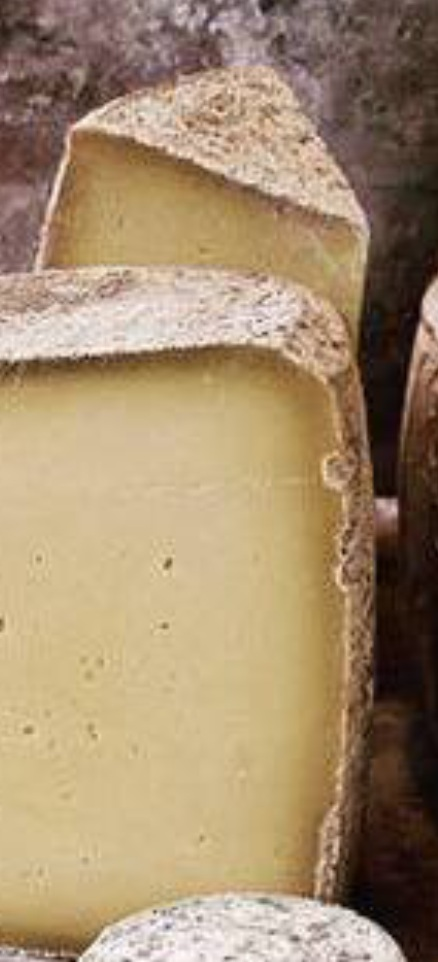 raw milk cheese scotland