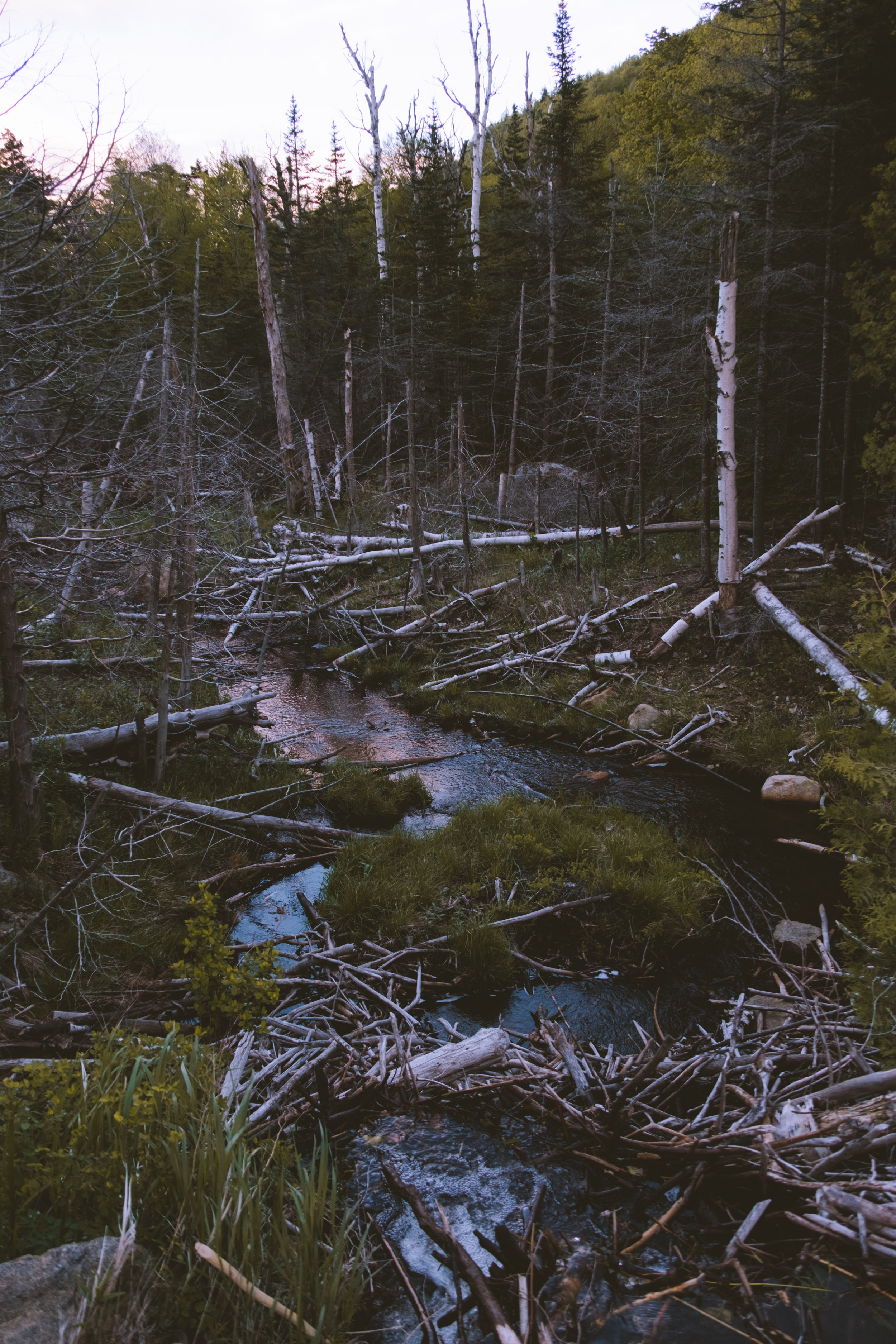 Small pond on the side of Whiteface Mountain