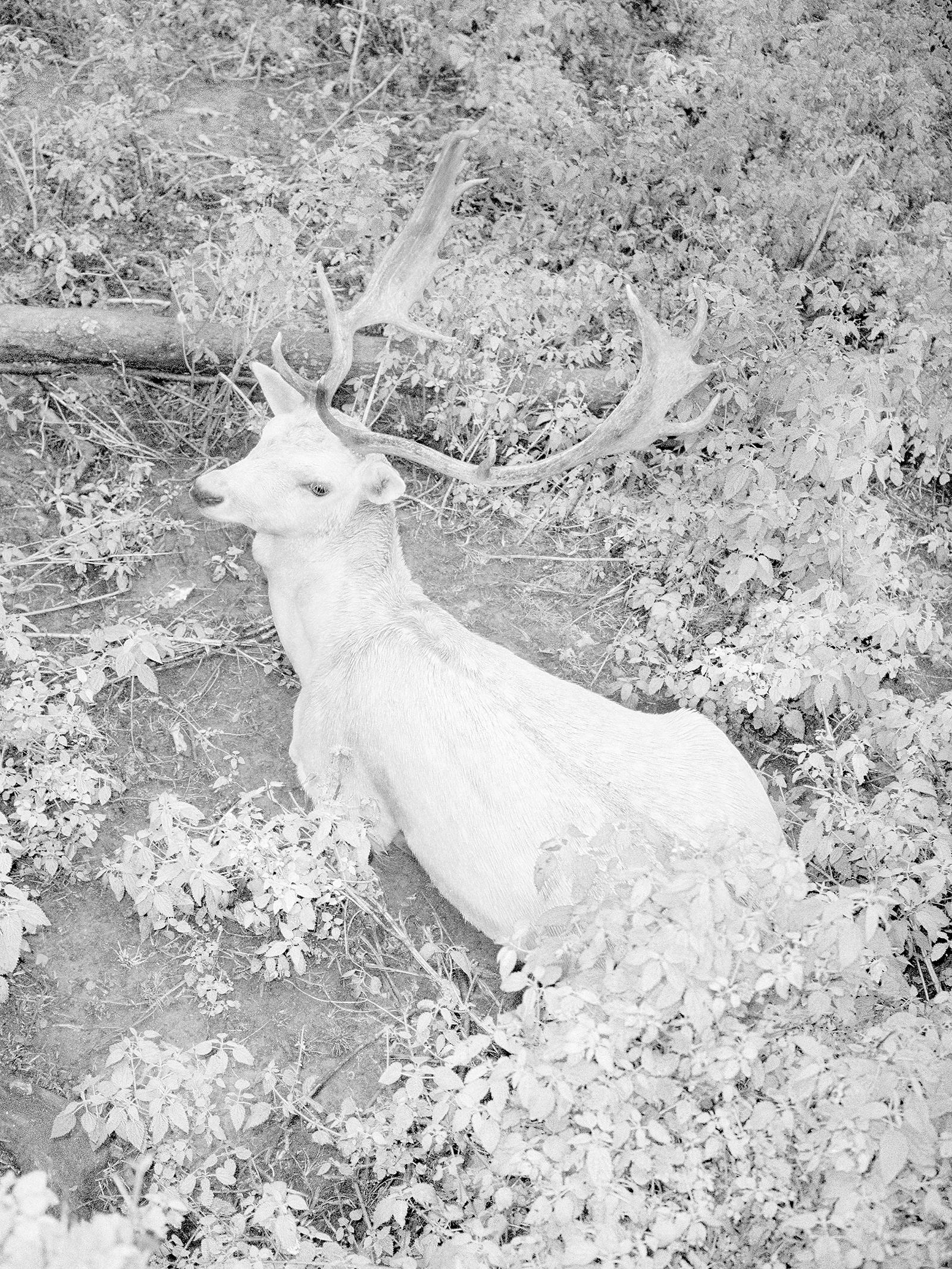 Bright Deer.jpg