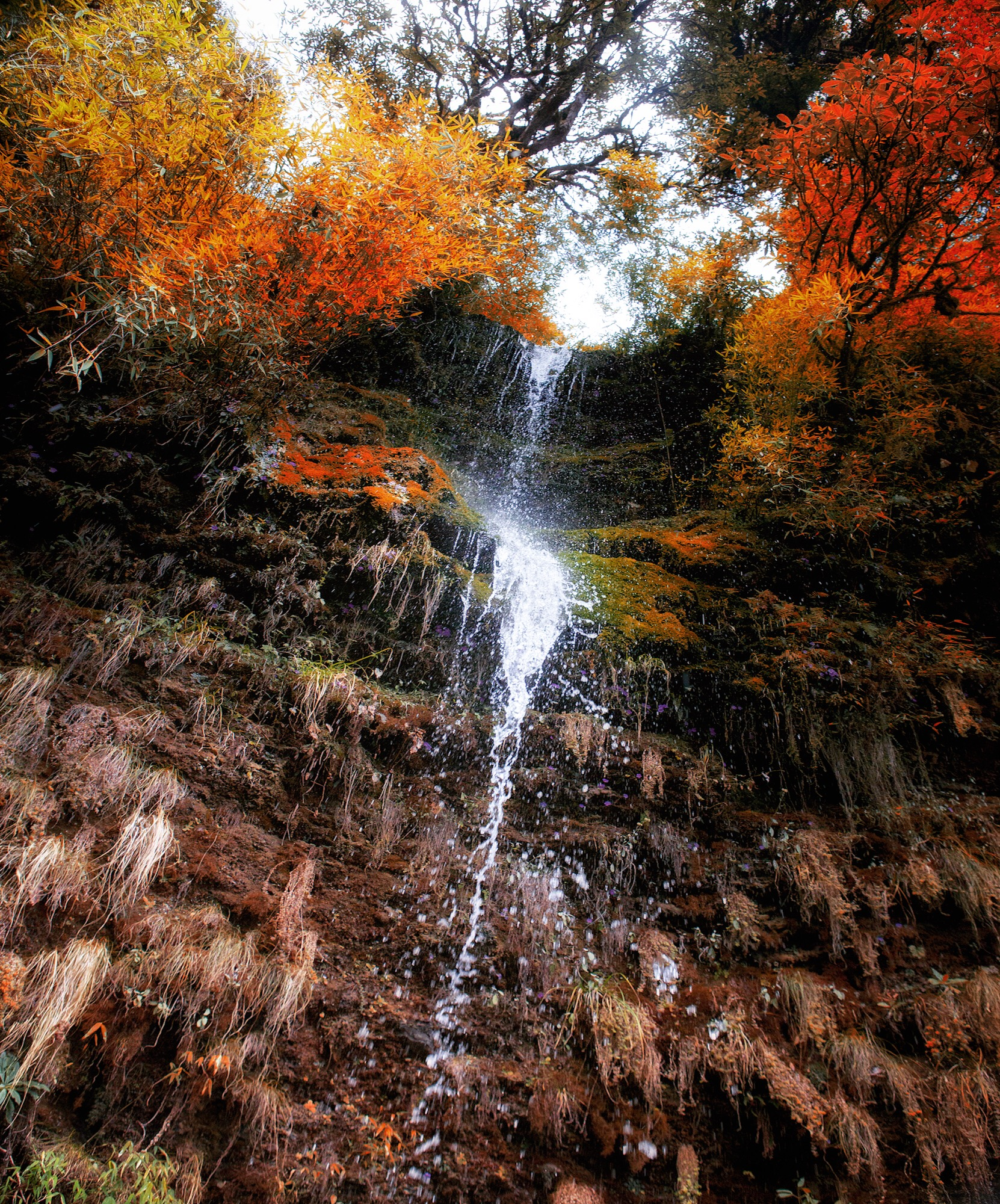 Nov 9.4, 2016   Water fell from the Rhododendron Forest. Through the Deurali Pass the hills teetered and toyed with 3,000 metres. The approach to Ben Thanti weaved against high slate with a quick stream echoing rosey sandstone and goldleaf.