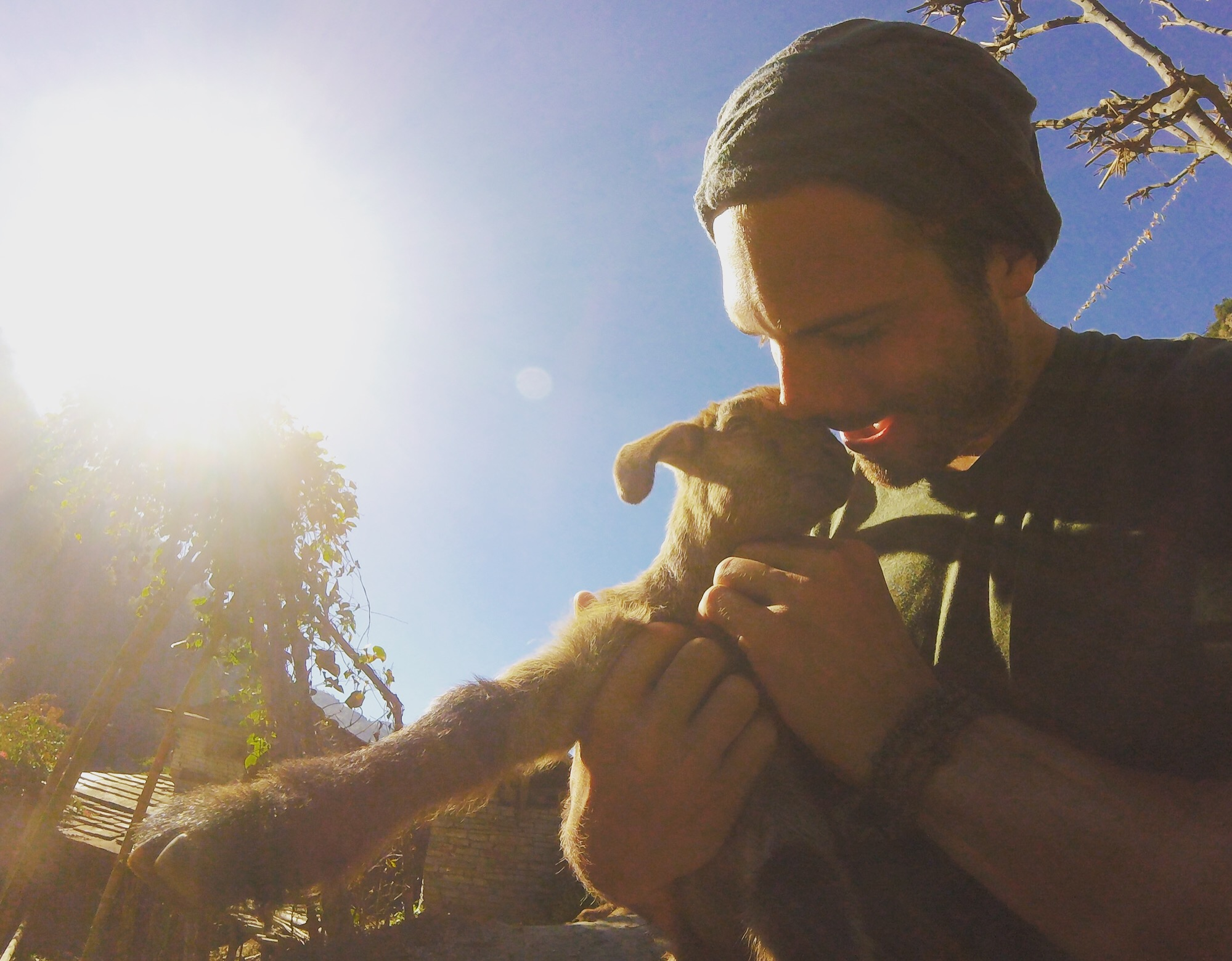 Nov 14.1, 2016   I almost stole this baby goat. Walking into Ghorepani we saw an entire flock of them being tamed by a small boy. We ran down the rock steps like little kids towards him—Namaste! Then I pantomimed picking one up. The boy nodded.
