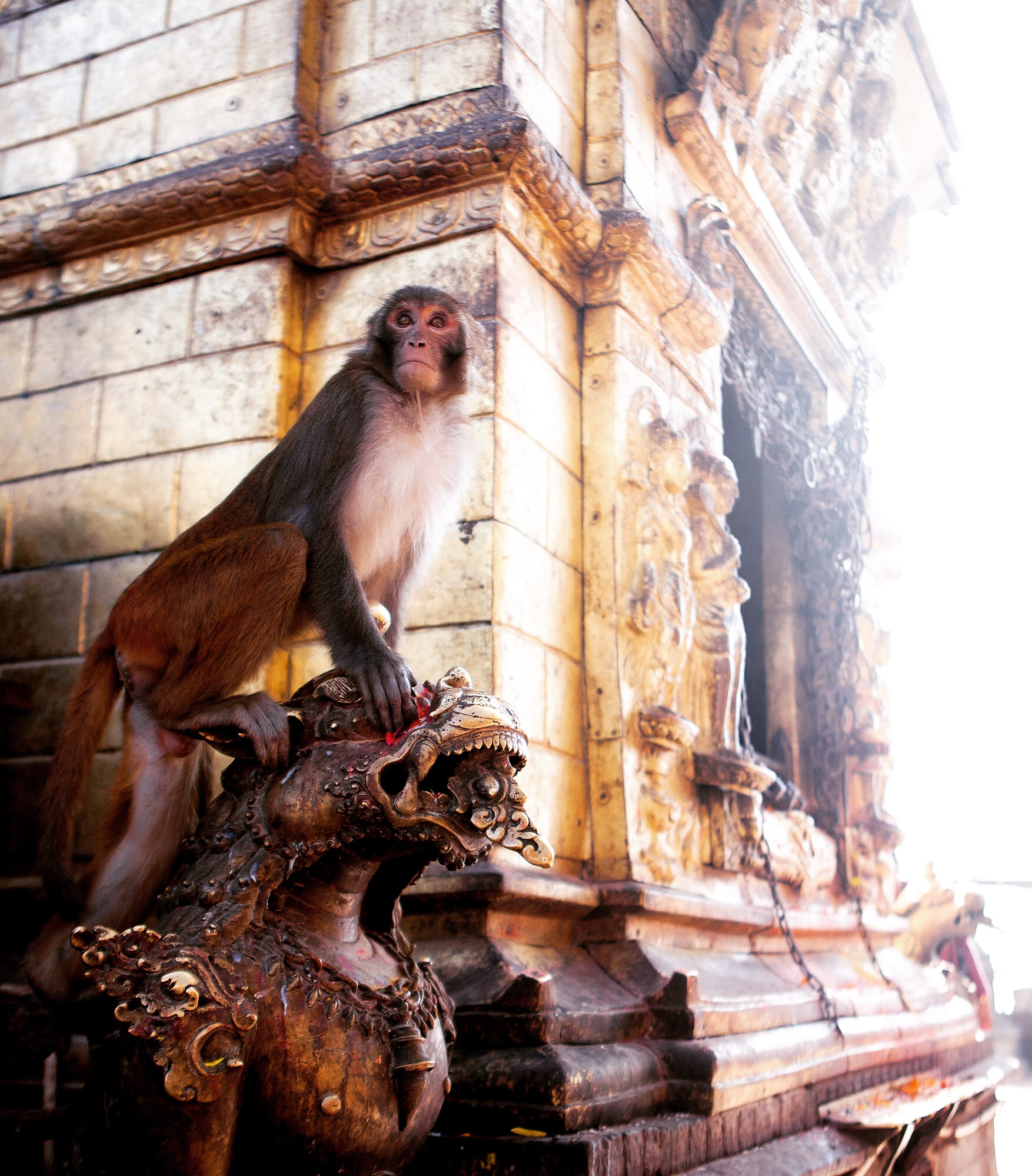 Nov 16.2, 2016   Swayambhunath is one of the most sacred Buddhist pilgrimage sites in the world. It sits central to, yet high above Kathmandu Valley. Also known as the Monkey Temple, wild macaques roam the temple grounds as holy figures, the result of endemic Buddhist mythology. This temple was wracked by the 2015 earthquakes in Nepal and the rebuild was active during our visit. The patrons both high in this temple, and of the ground, are still devastated by the natural disaster. They are also disturbed by how much history was shaken to the ground, but tell heartbreaking, personal stories of their families and livelihood being displaced from underneath.