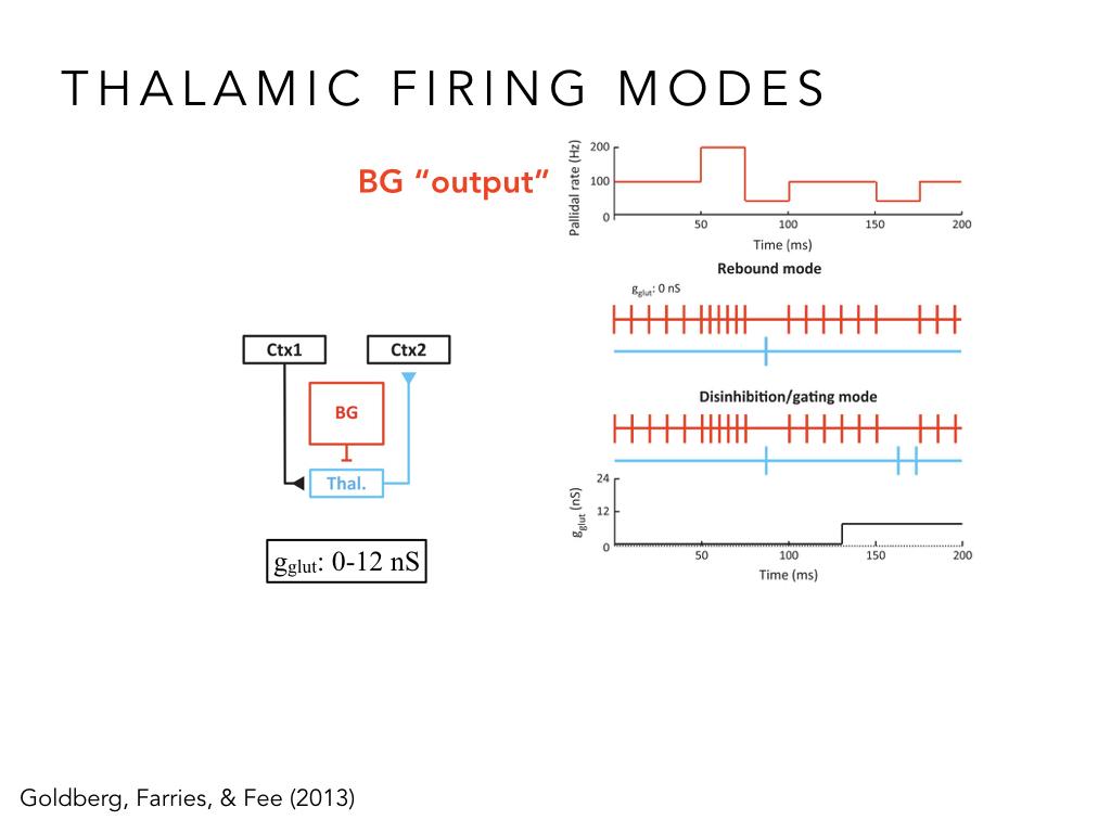 BIO222-GSI-Matt_CNS-Aspects-of-Motor-Control-II.023.jpeg