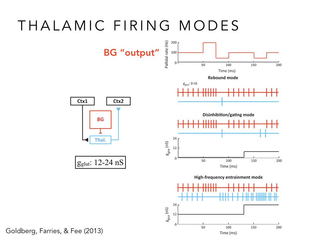 BIO222-GSI-Matt_CNS-Aspects-of-Motor-Control-II.024.jpeg