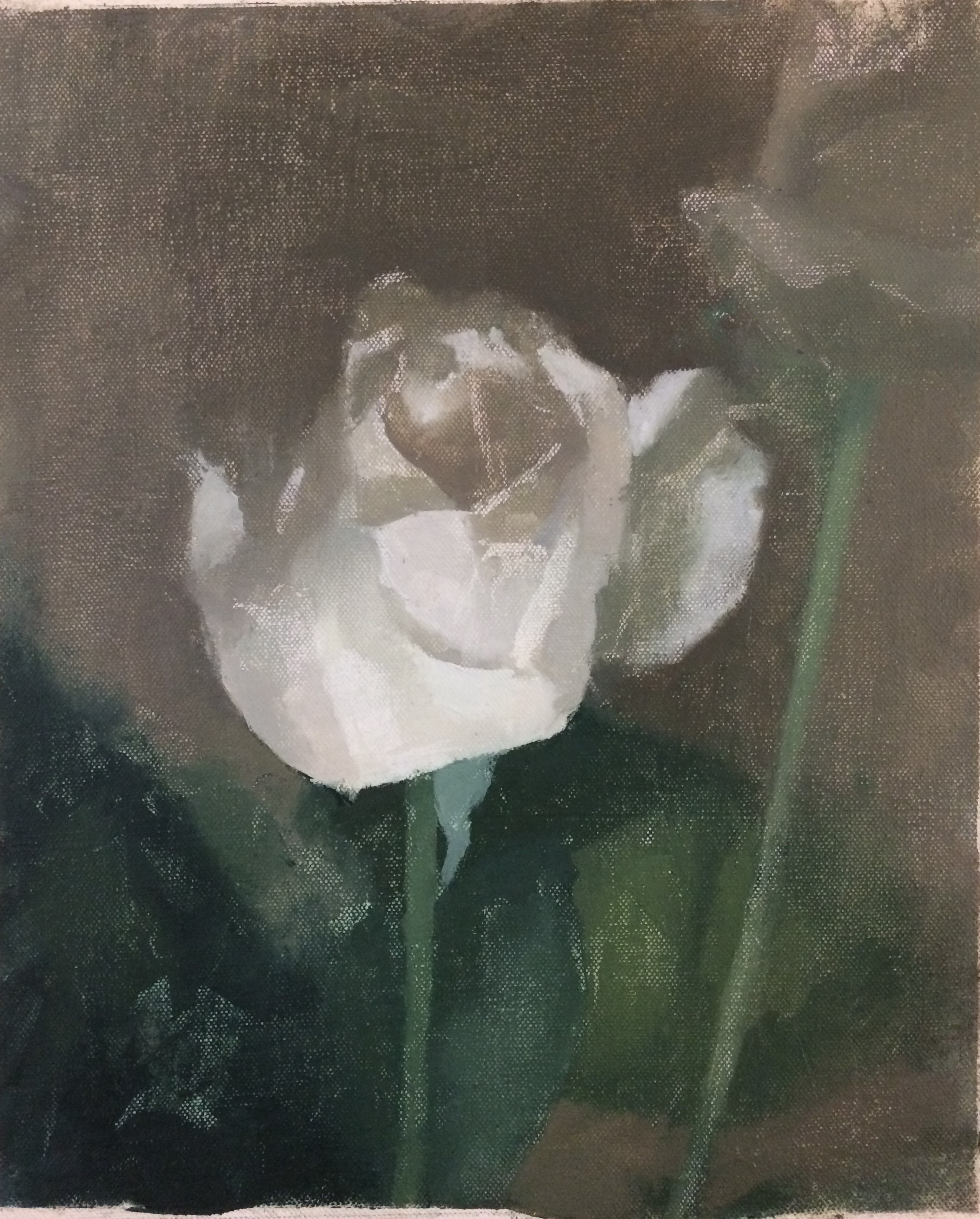 """Rose from Matthew"" 8"" x 10"" oil on canvas, private collection"