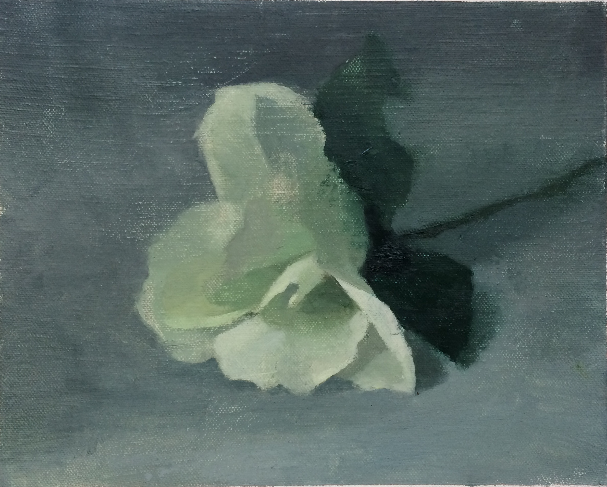 """White Flower"" 8"" x 10"" oil on canvas mounted on board"