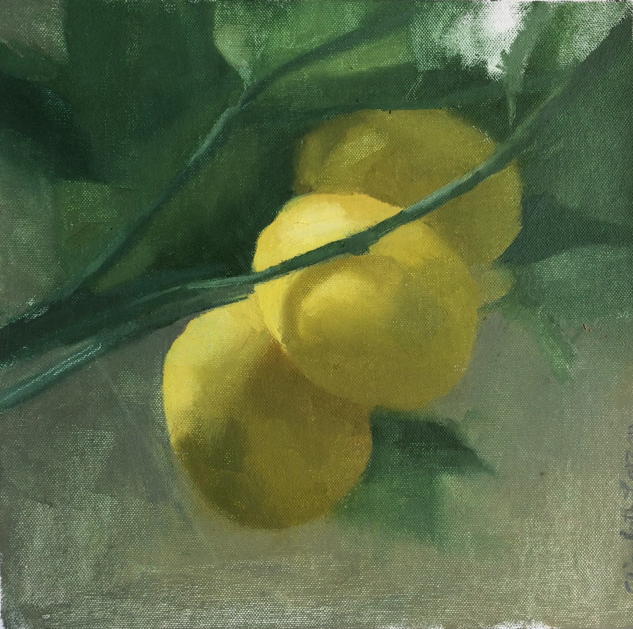 """Lemons of Redlands"" 12"" x 12"" oil on canvas, private collection"