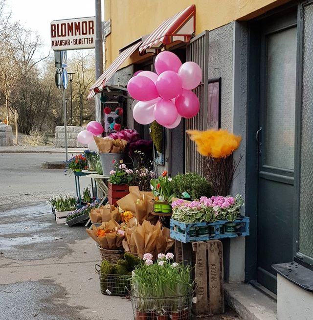 Hos @tellusblommor har våren redan kommit.