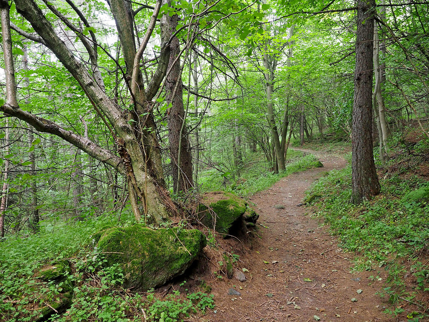 P9031107-sentiero-dei-Franchi.jpg