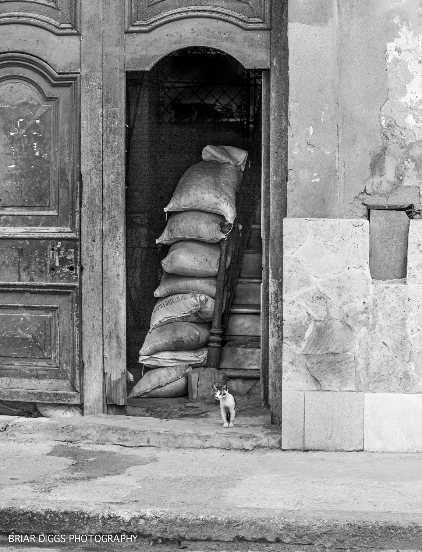CUBAN FINE ART IMAGES-38.jpg