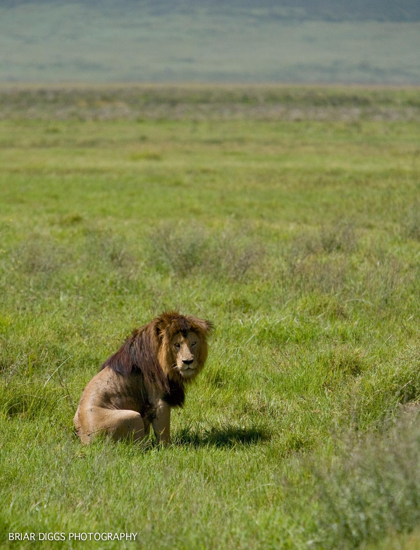 TANZANIAN ANIMALS-27.jpg