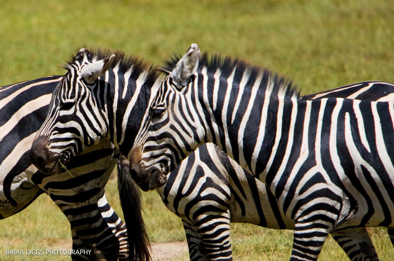 TANZANIAN ANIMALS-29.jpg