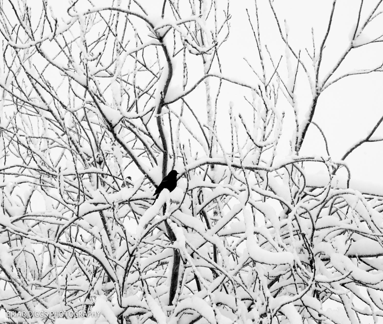 B&W FINE ART IMAGES-61.jpg