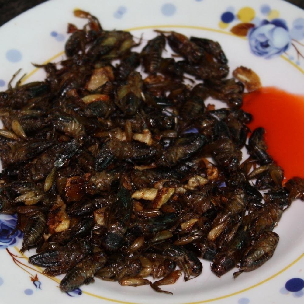Fried crickets... taste like popcorn