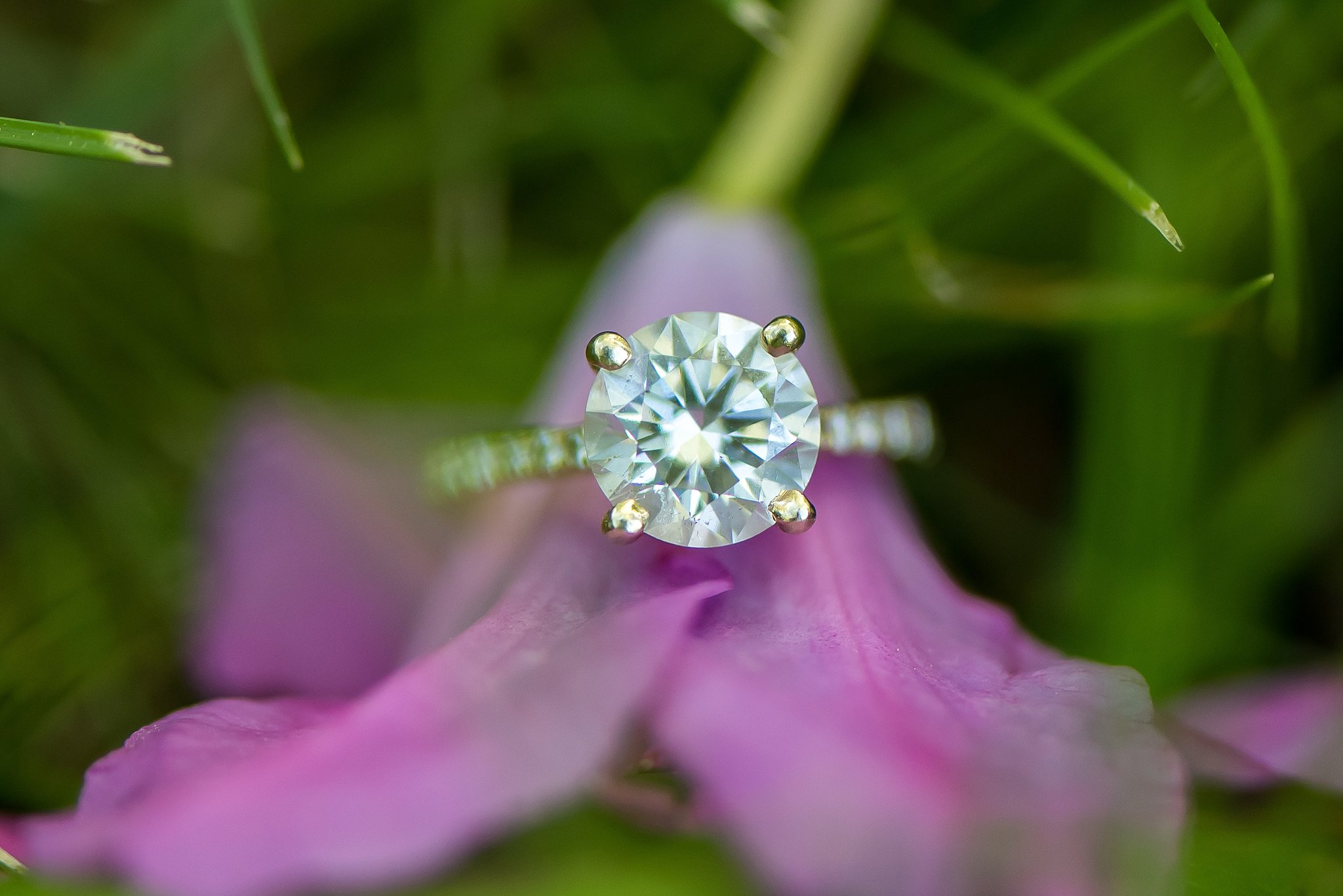 Larz Anderson Park engagement ring