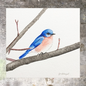 Bluebird - 5 x 5 on 140# Arches watercolor. Part of the 5 x 5 series. Available for purchase.  $45  Found in my shop.