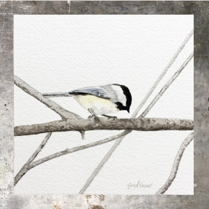 Chickadee - 5 x 5 on #140 Arches watercolor. Part of the 5 x 5 series. Available for purchase. $45  Found in my shop.