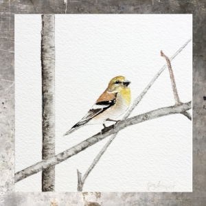Goldfinch - 5 x 5 on #140 Arches watercolor. Part of the 5 x 5 series. Available for purchase. $45 Found in my shop
