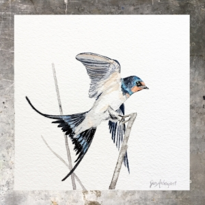 Barnswallow - 5 x 5 on #140 Arches watercolor. Part of the5 x 5 series. Available for purchase. $45  Found in my shop