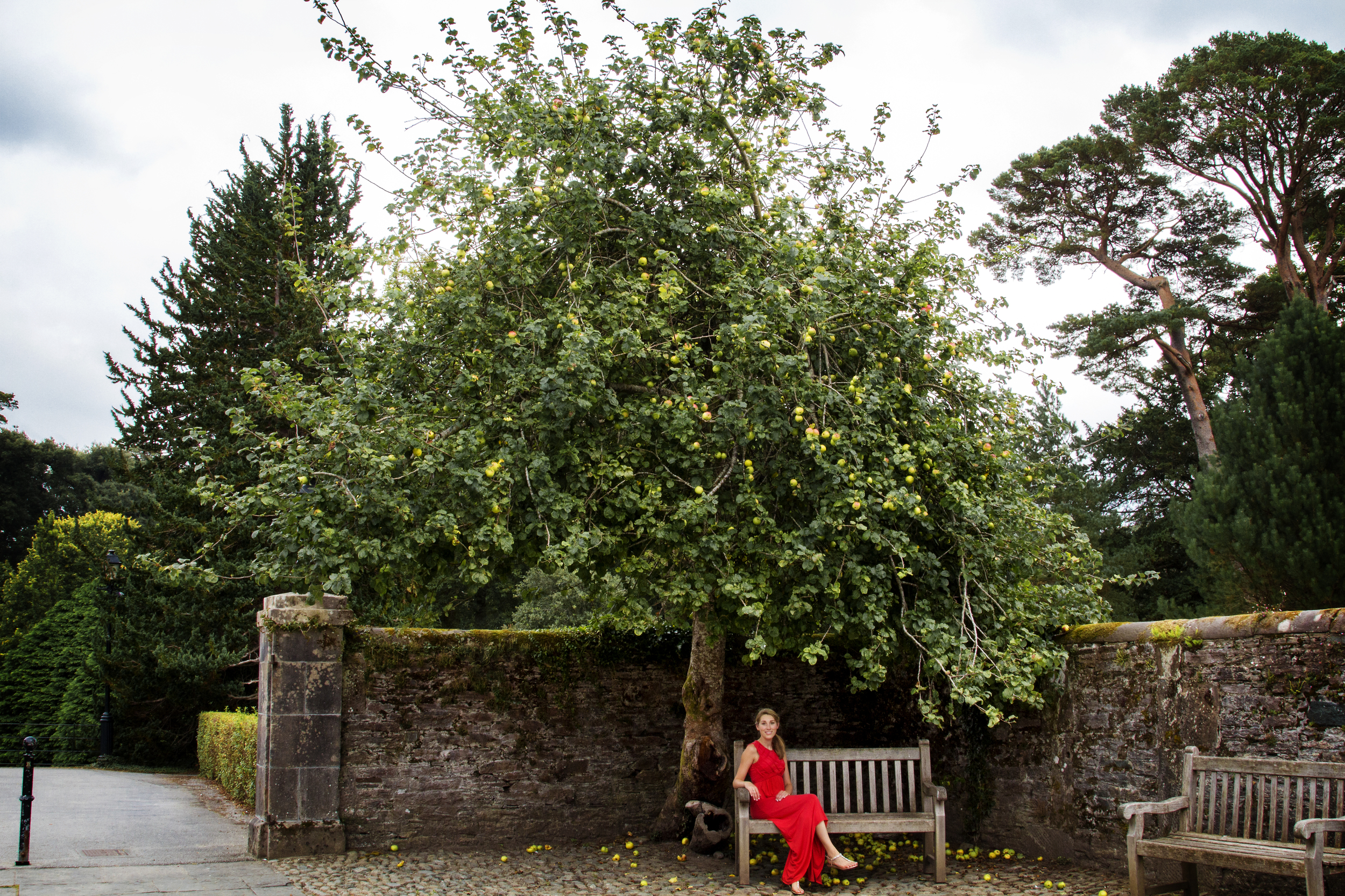 Ireland150_apples_m.jpg