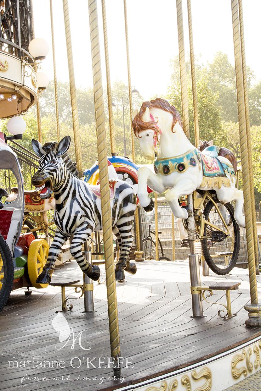 12France125_zebra.jpg
