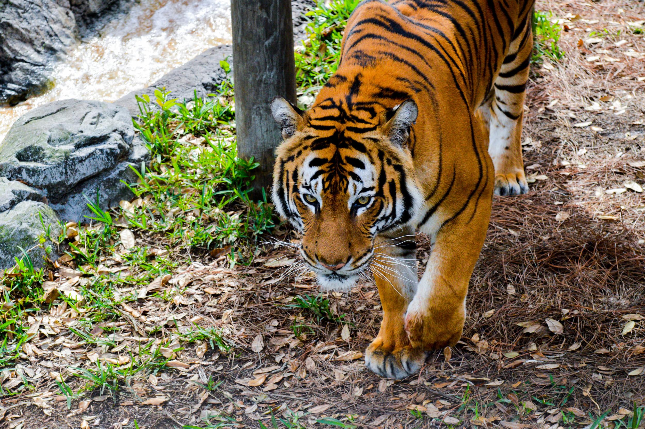 Zoo-8.jpg
