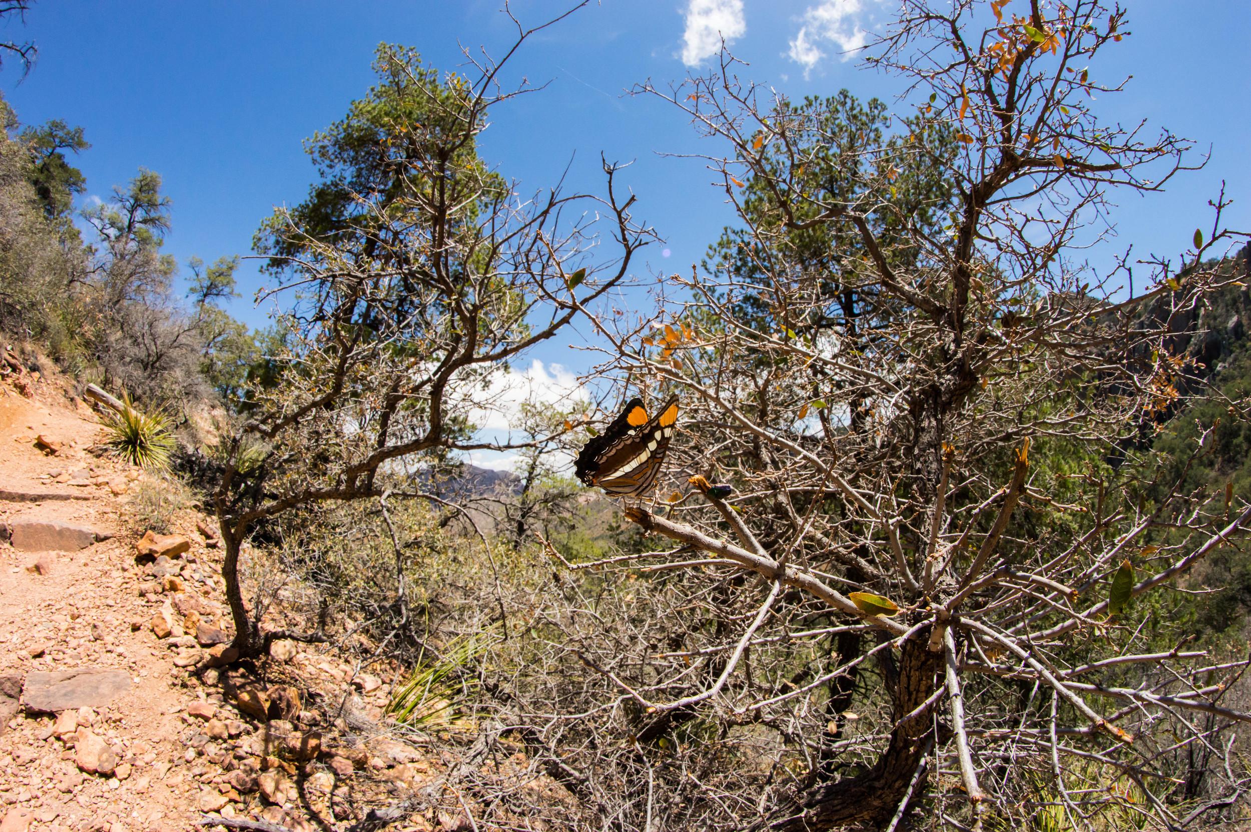 Hiking-13.jpg