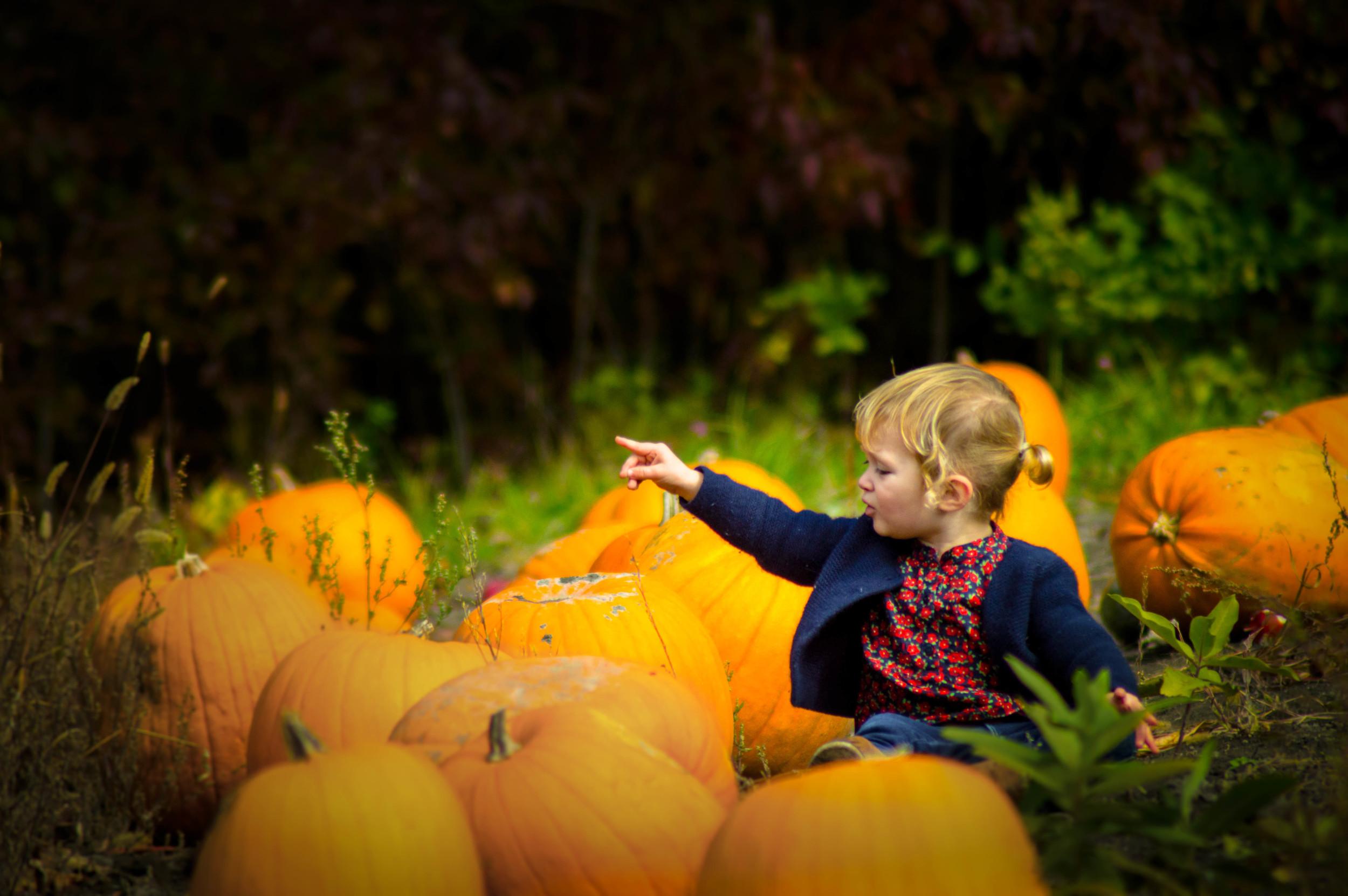 Pumpkin Patch: After
