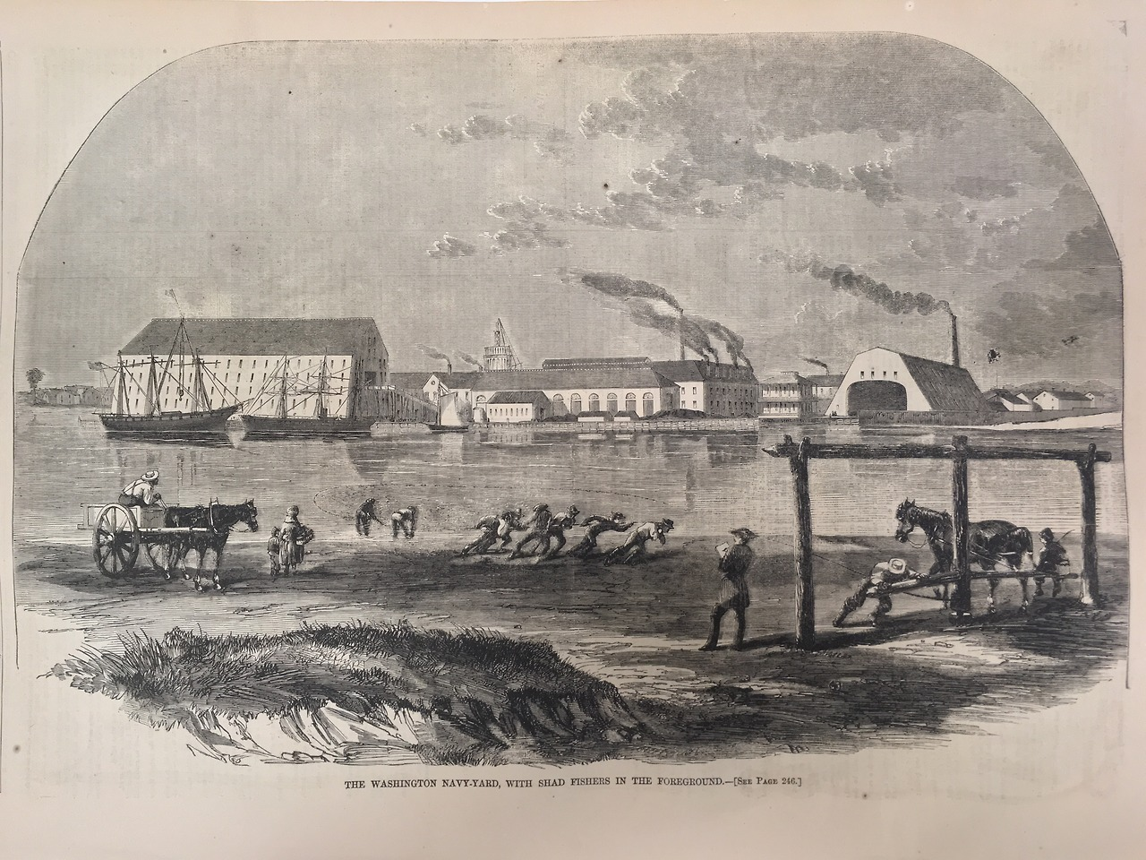 """The Washington Navy Yard, With Shad Seines in the Foreground."" Harpers Weekly, 1861. Collections of the Chesapeake Bay Maritime Museum.   Spring has historically meant the beginning of one of the Chesapeake's most significant harvests- shad. This ""founding fishery"" marked the beginning of large-scale commercial fishing in the Bay, in the mid-1700′s. Unlike oysters or crabs, which required canning and refrigeration (not invented for another 75 years), shad could be preserved just by being salted and dried. As many tobacco plantations switched to wheat, the time saved by the less-laborious crop meant that many waterfront estates began to use their slave labor to harvest shad as another way to make money.   Shad remained a vital industry in the Chesapeake well into the 20th century. This image, from Harper's Weekly in 1861, shows the traditional spring shad seine harvest on the shoreline of the Potomac. In the background is the Washington Navy Yard, depicted as tidy and efficient (a quintessentially Victorian love of industry), and beyond that, the skeleton of the Capitol Building, still under construction."