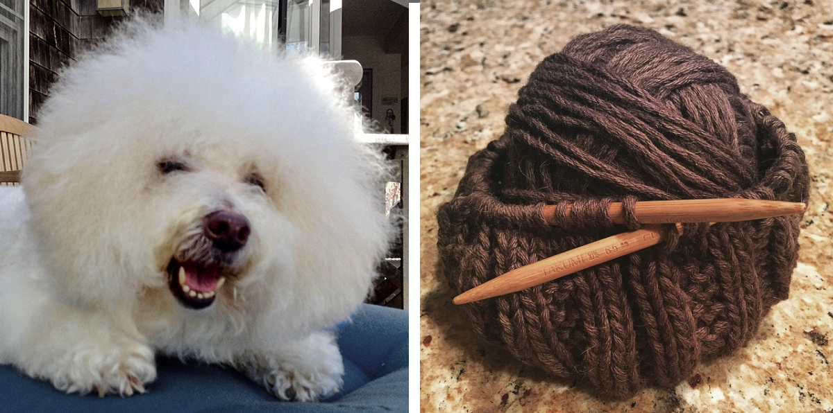 """Samuel Jackson Pollack, known as """"Jack"""" was Clay's second Bichon Frise;the first was """"Bailey."""" Photos courtesy of Clay Rivers."""