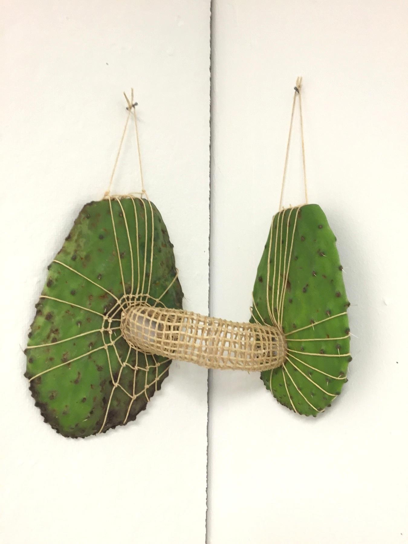 cactuslungs.jpg