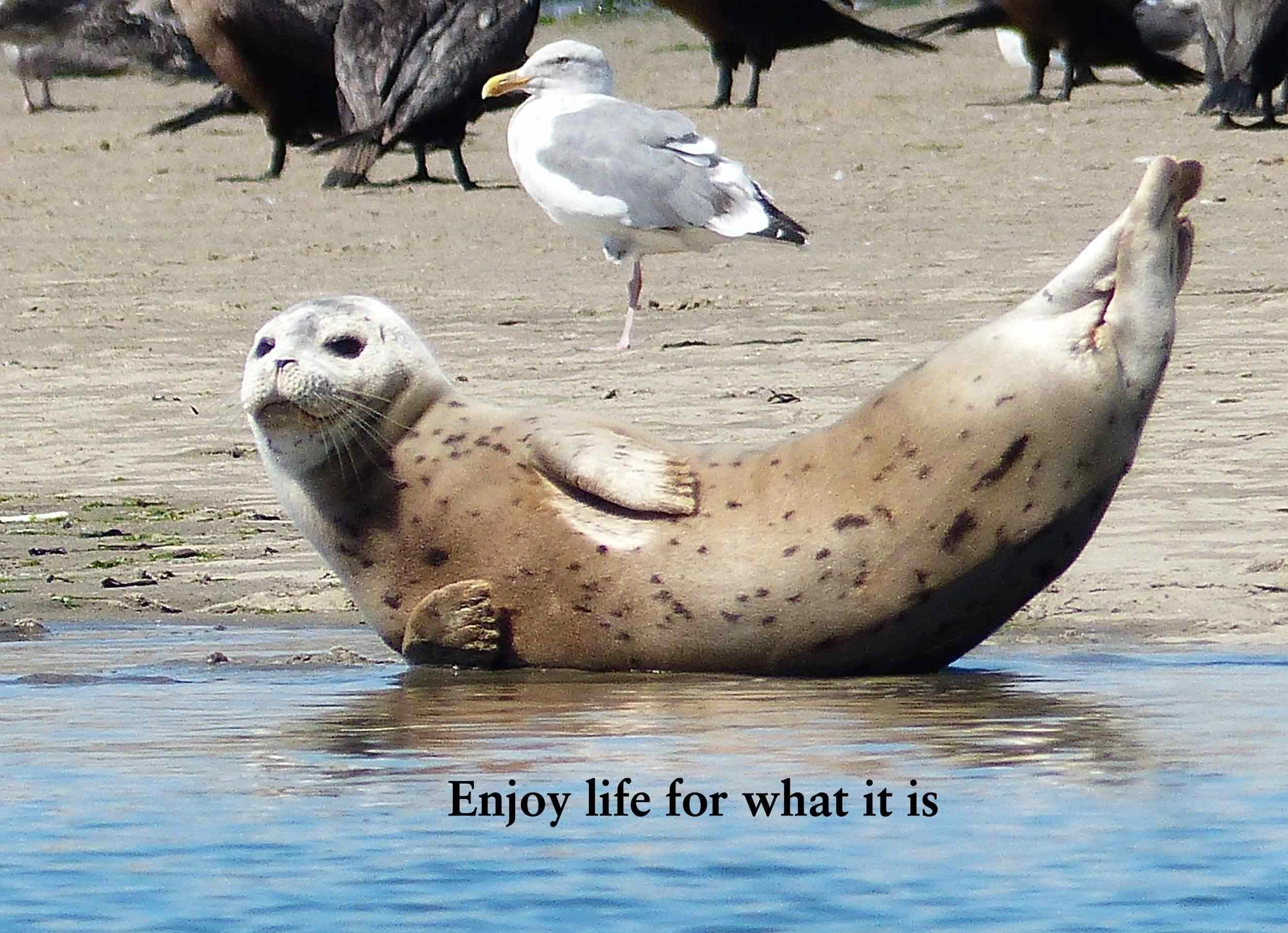Enjoy life for what it is.jpg