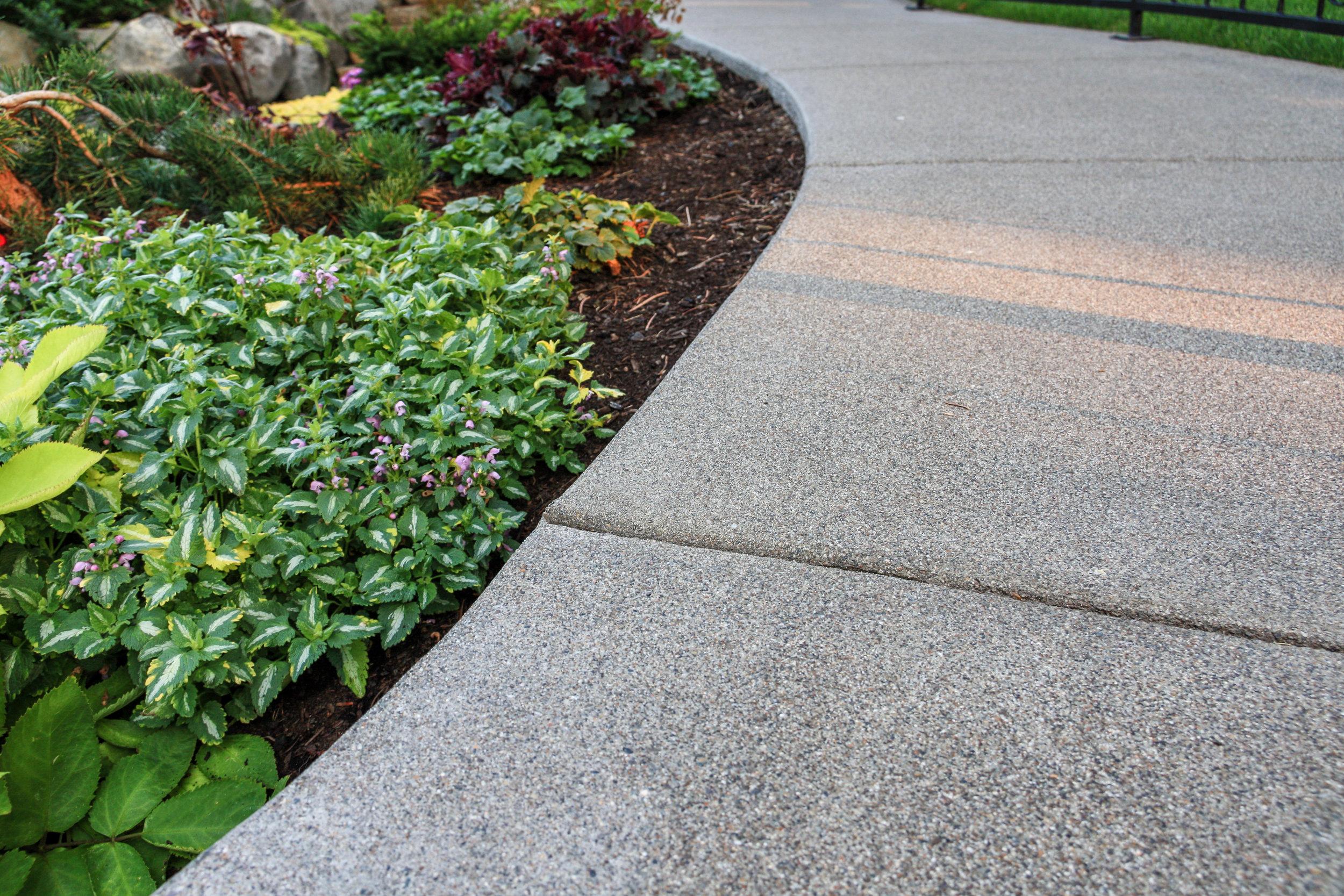 spokane sandwashed concrete sidewalk with anne greenaway lamium