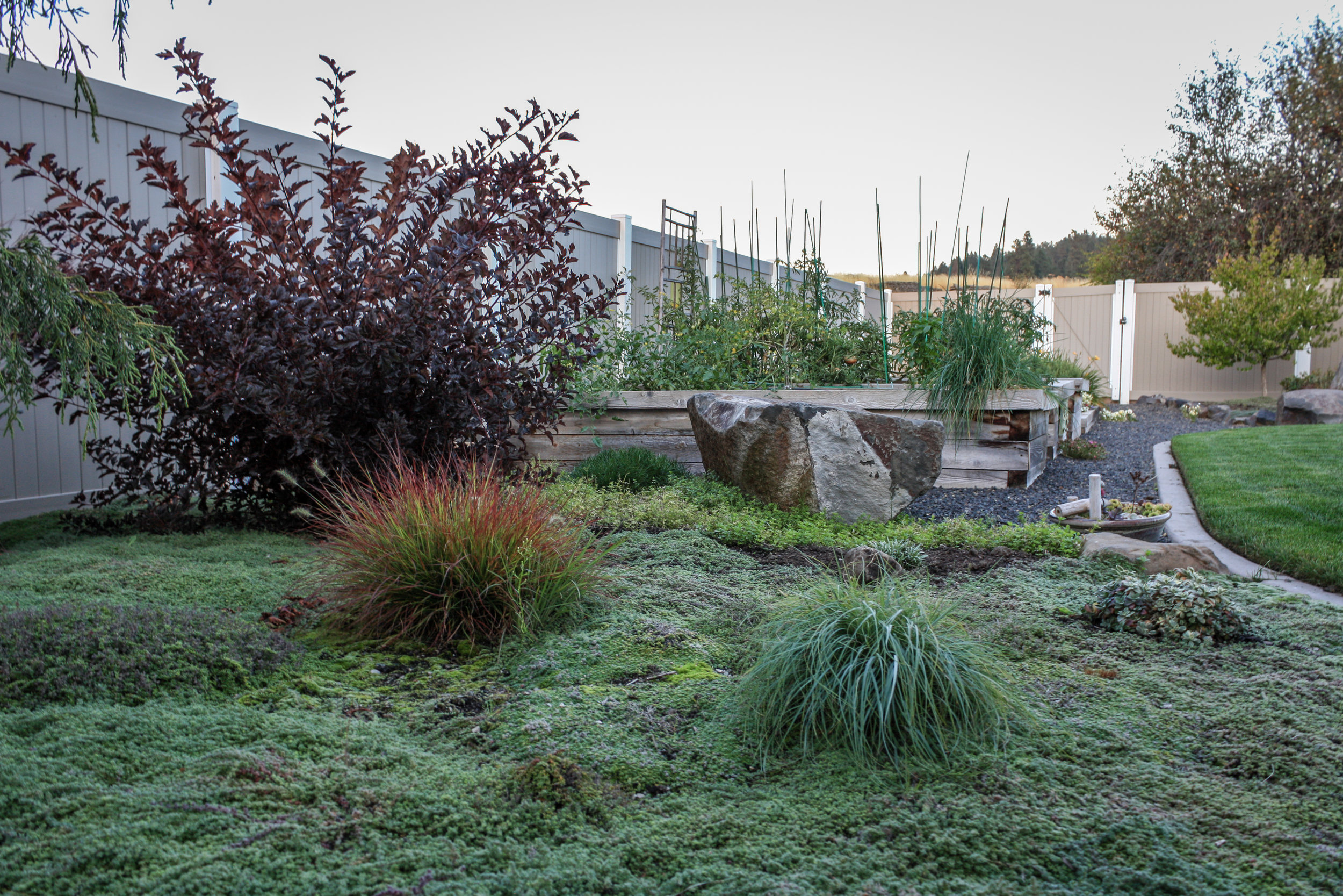 creeping thyme groundcover and garden beds in spokane valley landscape