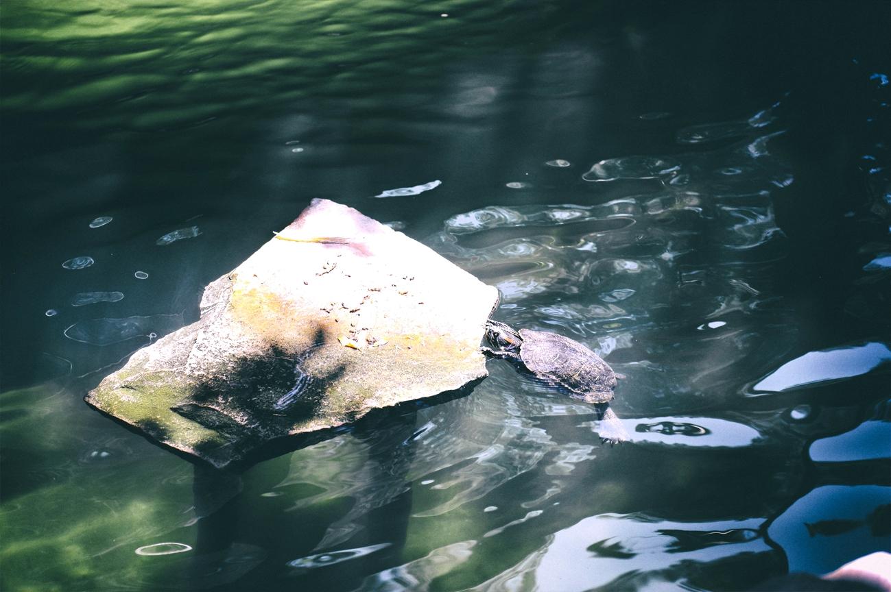 ZCLV.Turtle.jpg