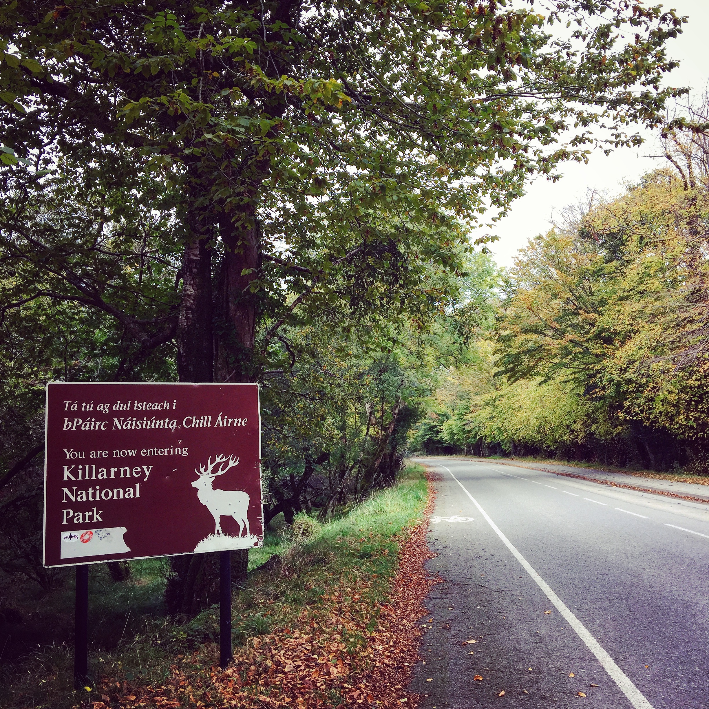 Cycling and hiking in Killarney National Park