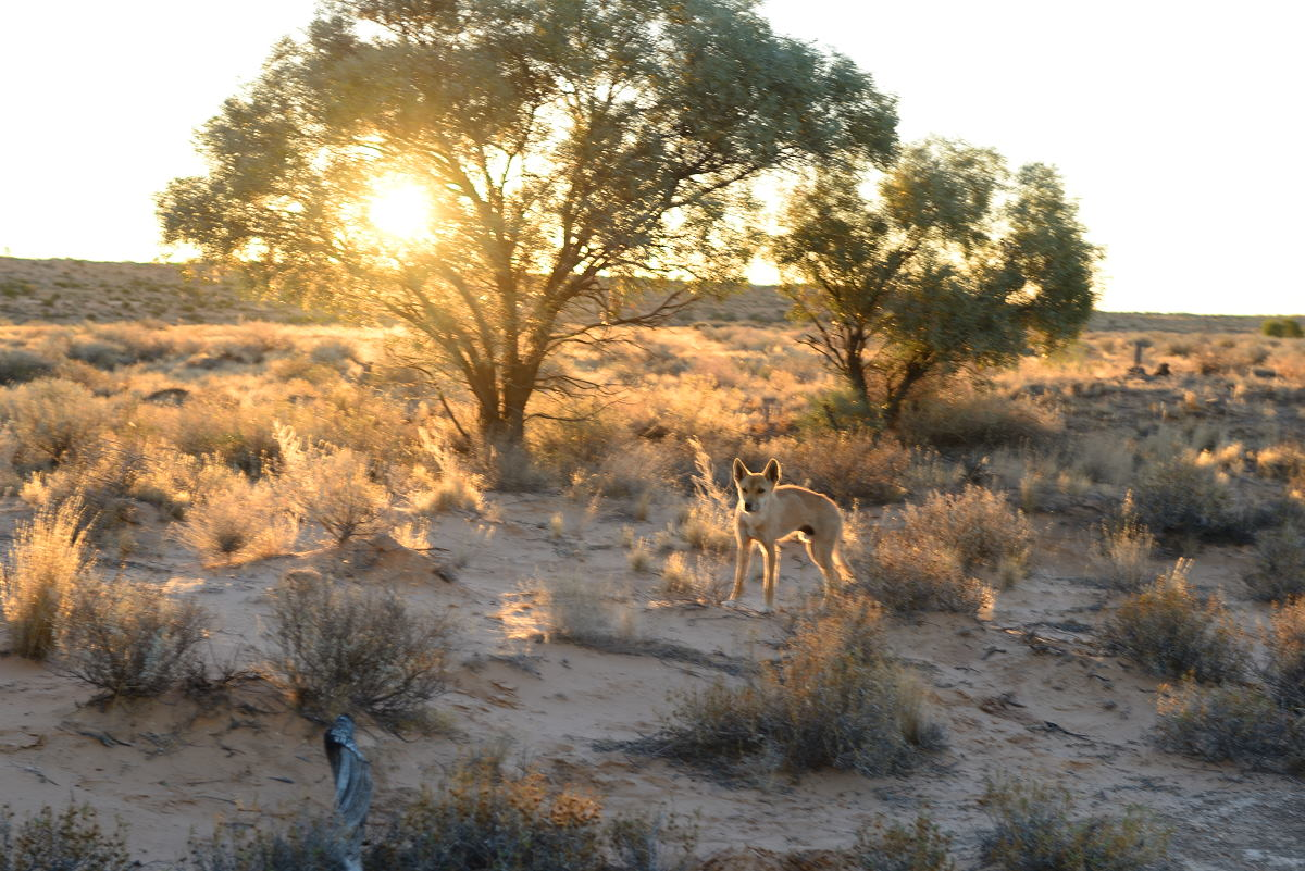 Solo driving through the Australian outback