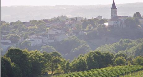 TDB in vineyard.png