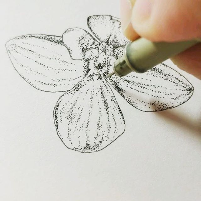 Starting to sketch a bit again! I'm working on making more time for art and not just science. This is an orchid that I finally got to bloom and then nearly immediately but accidentally snapped the stem off. Luckily it's been doing ok in just a cup of water, but it wasn't my best move. 🌸 . . . #orchid #scienceillustration #scientificillustration #drawing #pendrawing #pigmamicron #dotwork #makingtime #botanicalart #botanicalillustration #illustration #illustrator #scientistlife #
