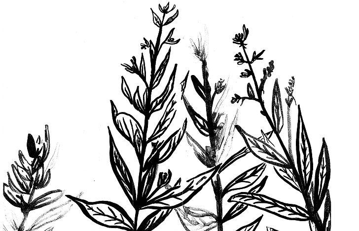 plants from BRW website.JPG