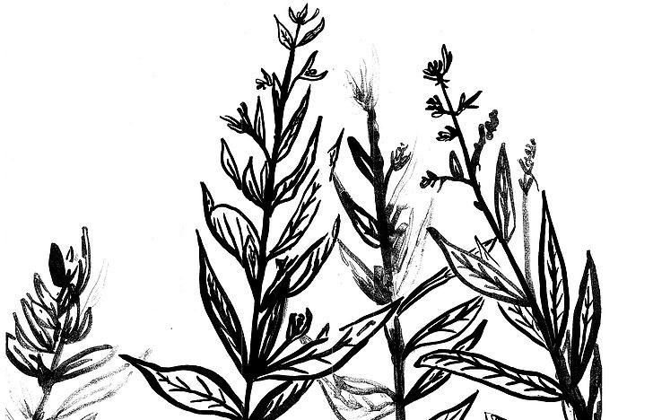 BRW Herbs.jpg