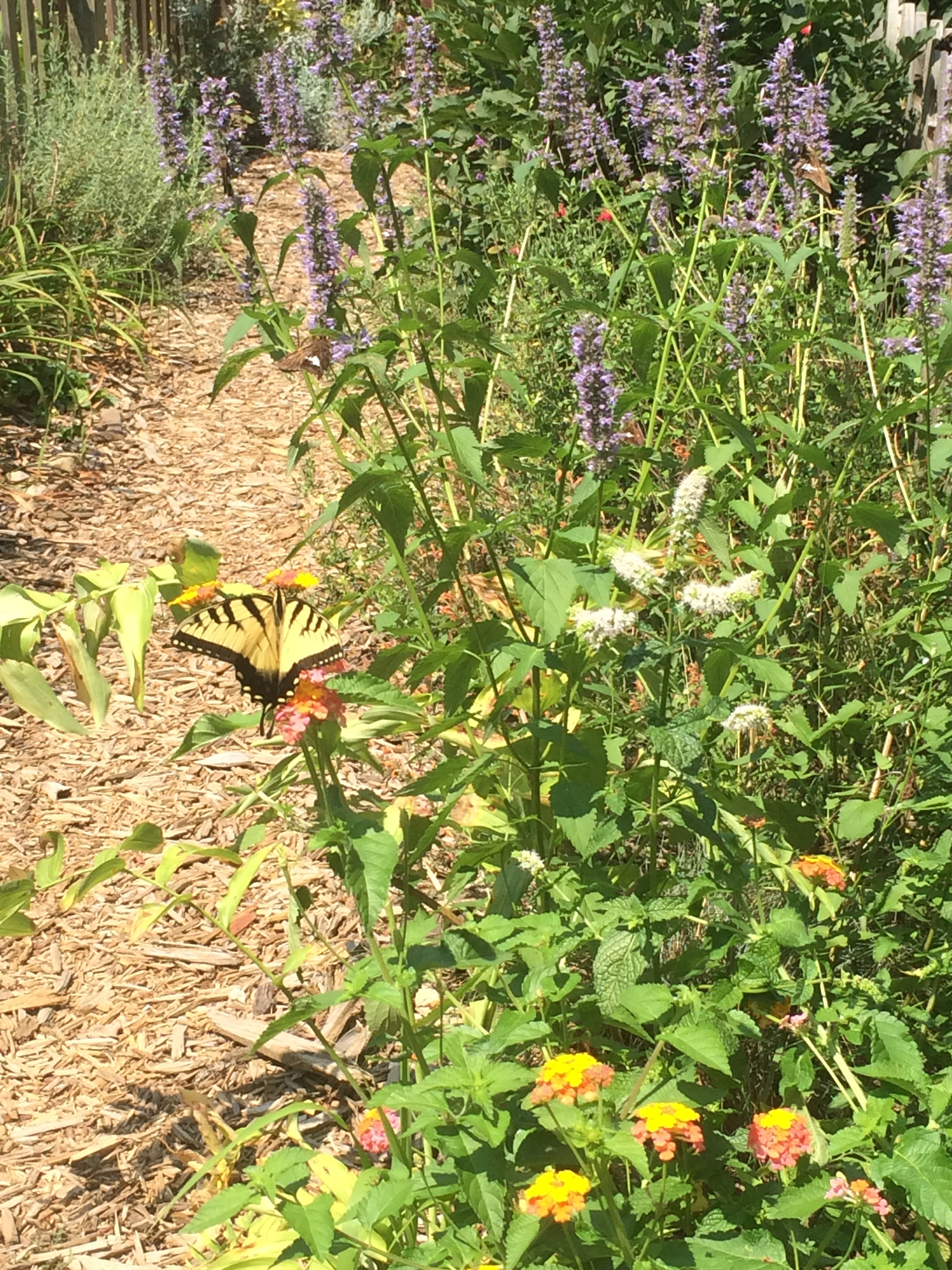 Enjoy the flowers and butterfly visitors in our cabin gardens!