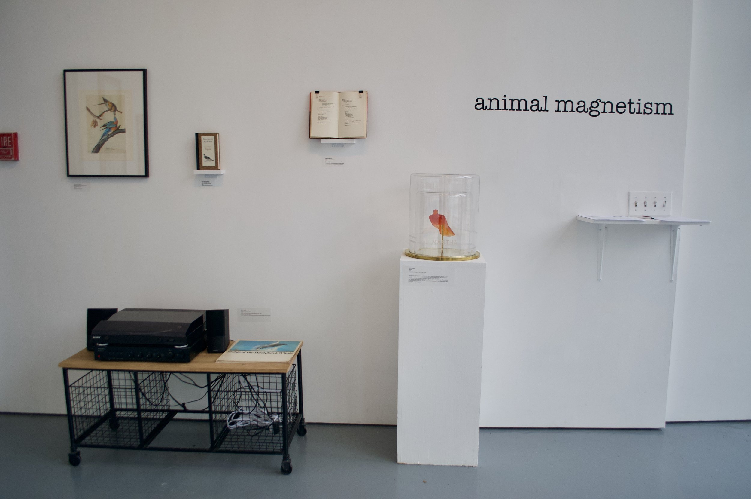 Animal Magnetism installation shot