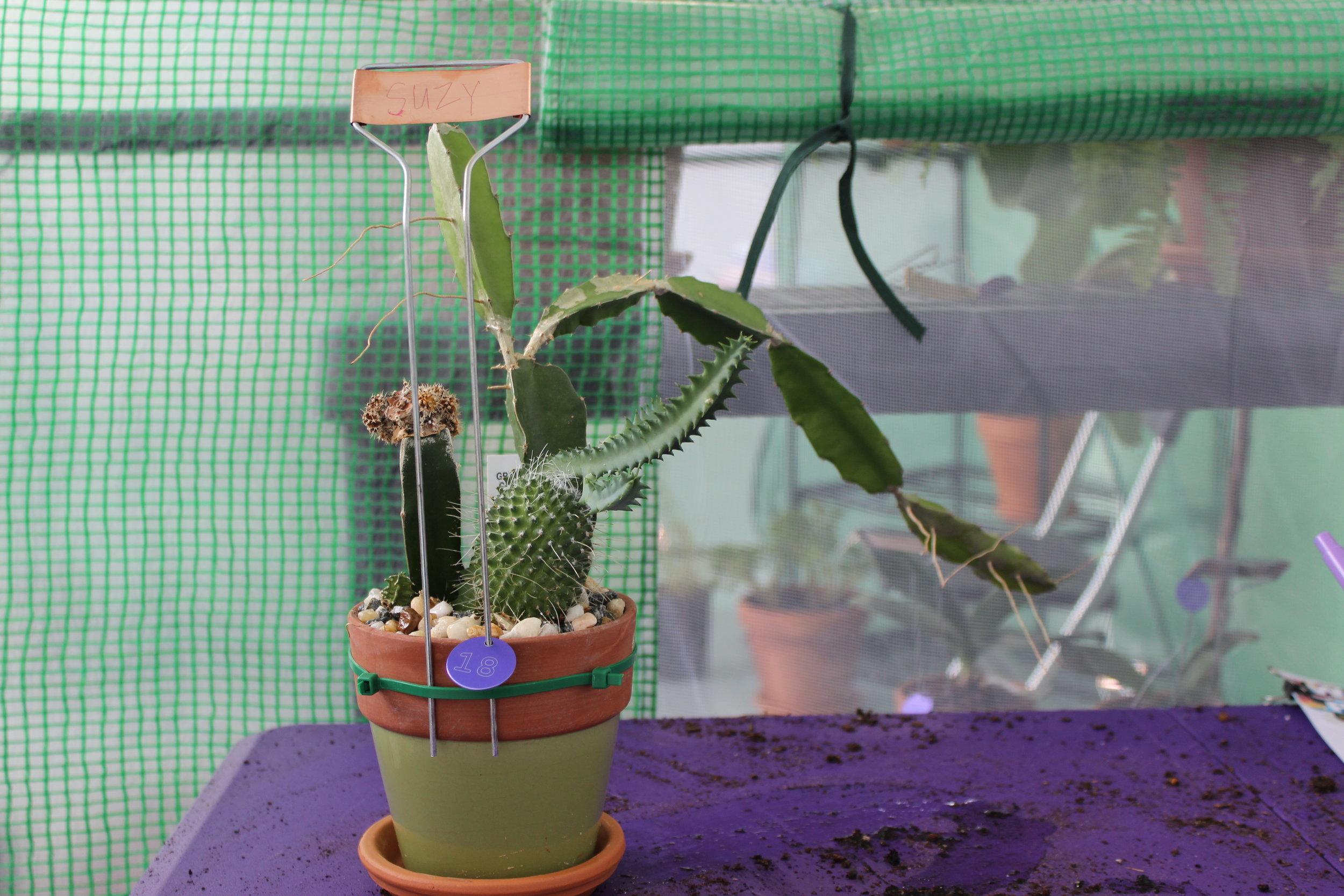 People Via Plants  2016