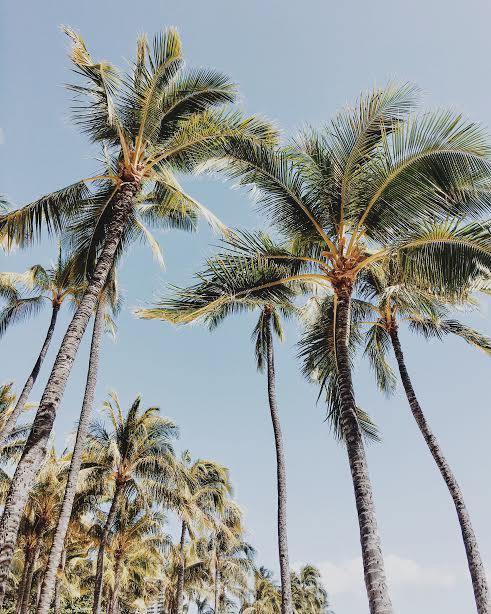 Christina Foret. Destination Wedding Photographer. Honolulu, Hawaii