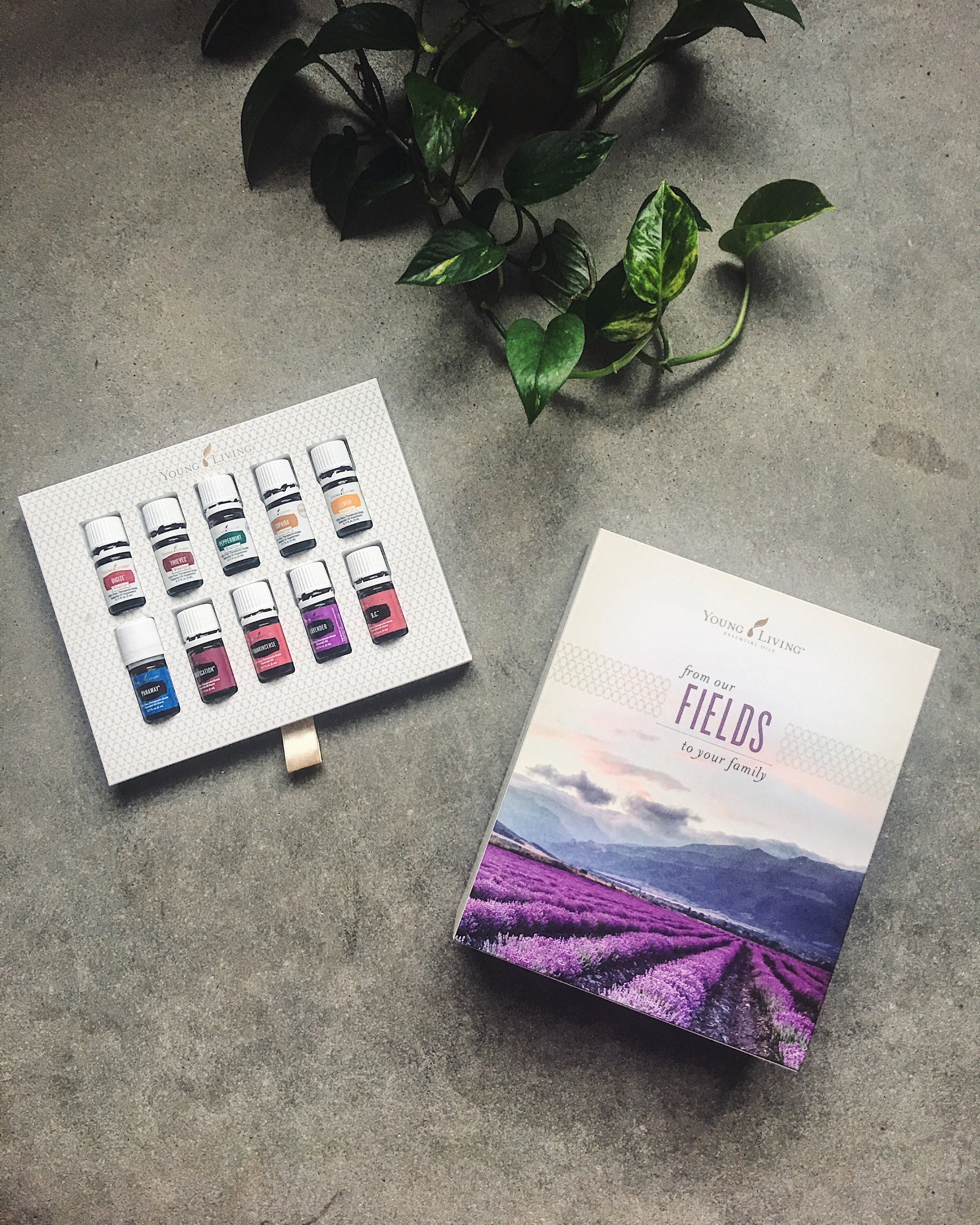 Young Living Starter Kit: Photo by Christina Foret. christinaforet.com