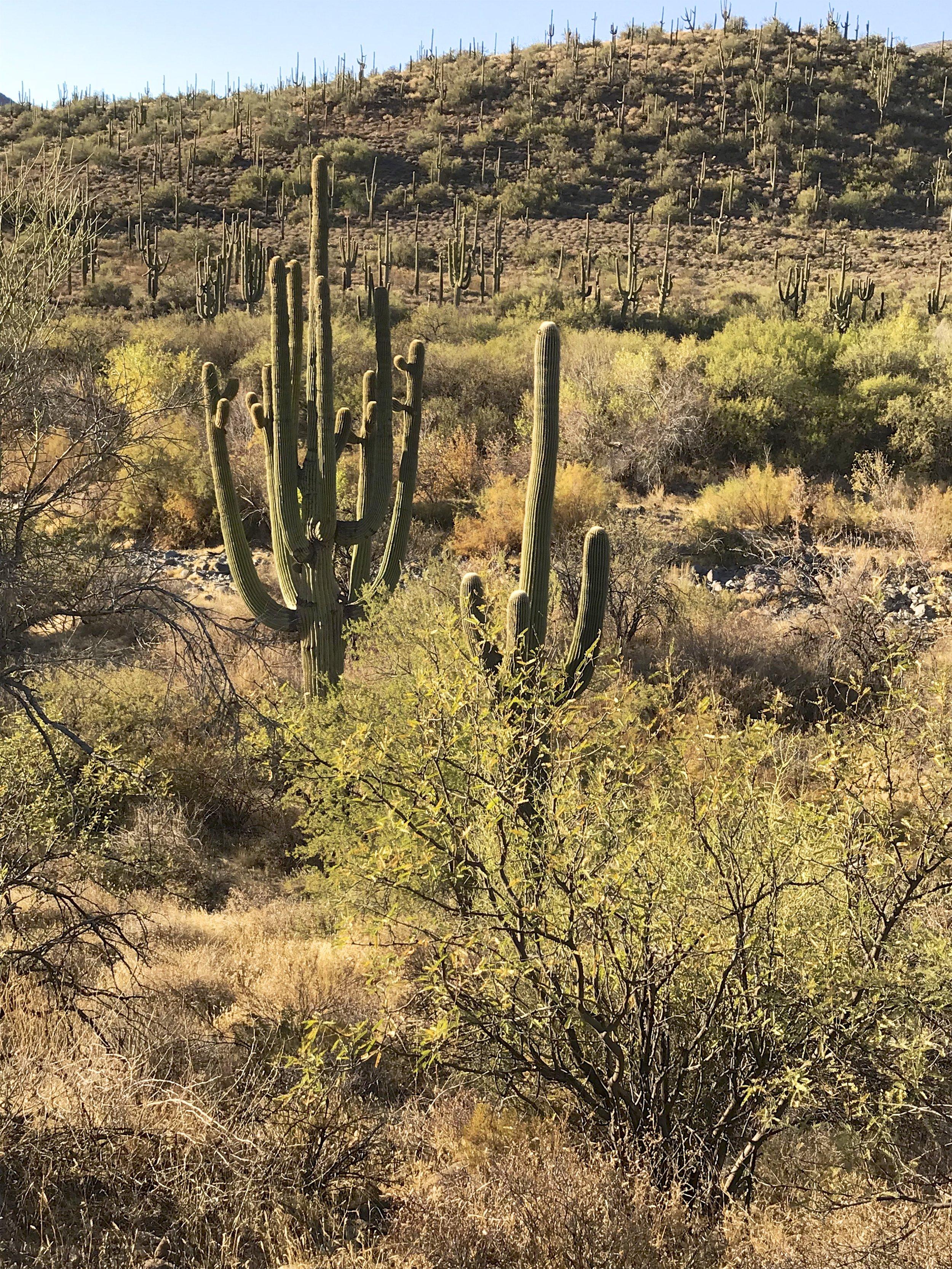 Spur Cross Ranch Preserve2.jpg