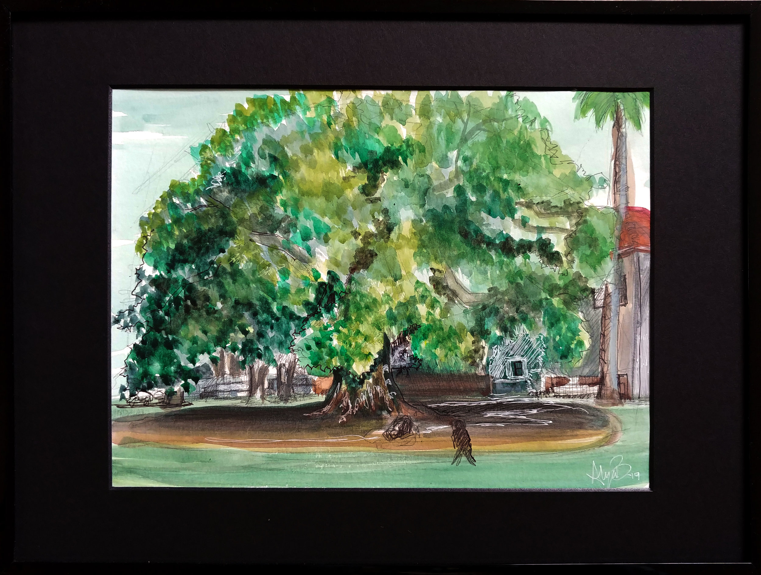 Mission Park Fig Tree Watercolor & Ink 12.5in x 16.5in (framed)