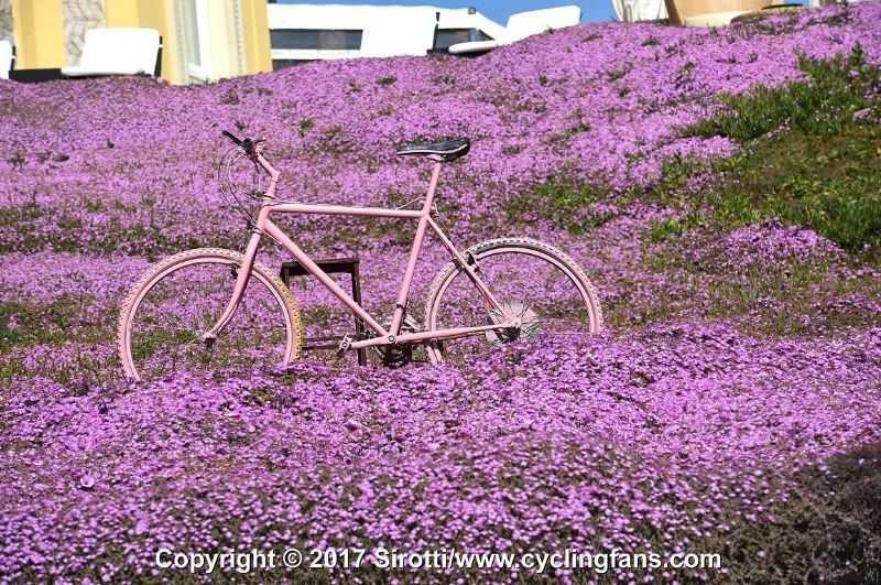 A pink bike amongst the blossoms in Alghero, one day, one day ...