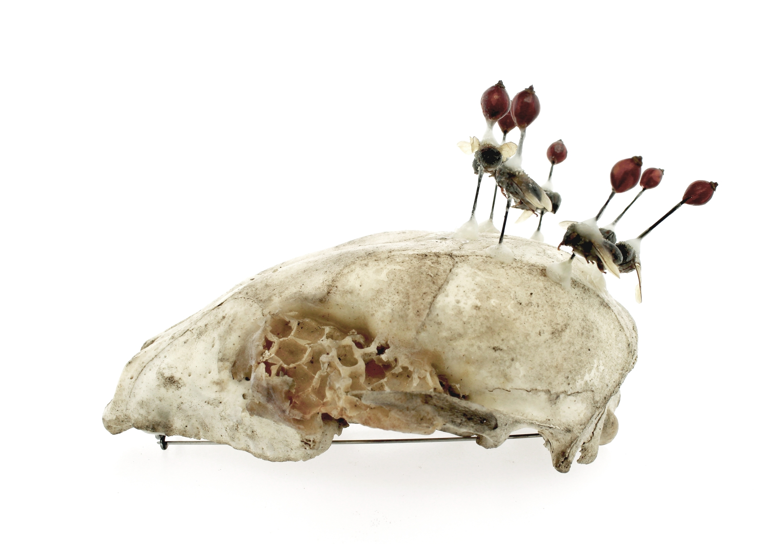 Dance  fox skull, honey comb, honey bees, beeswax, rose hip buds, insect pins, brass, steel